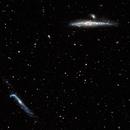 Whale Galaxy, NGC 4631 + NGC 4656,                                Alfred Leitgeb