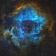 NGC 2244 and Rosette nebula - Hubble palette,                                Miroslav Horvat
