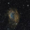 Sh2-261 Lower's nebula,                                Frank Rauschenbach