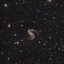 SN 2015F nella galassia Ngc2442,                                Rolando Ligustri