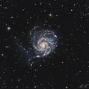 Pinwheel Galaxy - M101 (again),                                Maurizio Berti