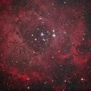 NGC 2244 Rosettennebel,                                Avelon