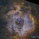 NGC 2237 - Rosette Nebula,                                Serge P.