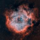 The Magnificent Rosette Nebula in HOO,                                Aaron Freimark