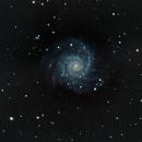 M74 galaxy,                                Bob Scott