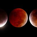 Lunar Eclipse - Jan 2019,                                Renan