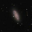 NGC 2976,                                lowenthalm