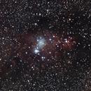 NGC 2264 - Cone Nebula,                                Stefan Rehder