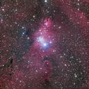 NGC 2264,                    Casey Good