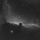 The Horsehead Nebula,                                Patrick Fricker