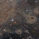 Cosmic starfish or LDN1100,                                Paweł Radomski