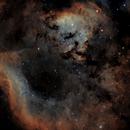 NGC7822 The Monster Shrimp,                                rayp