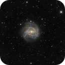 M83 Southern Pinwheel,                                  Michael Feigenbaum