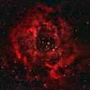 Rosette Nebula,                                Pam Whitfield