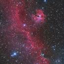 Seagull nebula,                                Ken-ichiro Tanaka