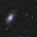 NGC 2403,                                Robin Clark - EAA imager