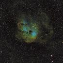IC410 - The Tadpoles Nebula,                    toxophilus