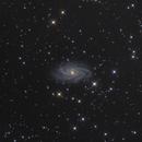 NGC 2336 delicate spiral,                                John D (jaddbd)