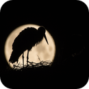 Stork at full moon,                                Markus A. R. Langlotz