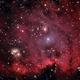 NGC 2175, The Monkey Head,                                Mark Holbrook