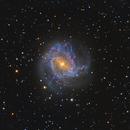 M83 Southern Pinwheel Galaxy,                                  Jerry Macon
