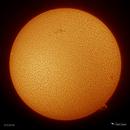 Sol - 3/3/2018,                    Damien Cannane
