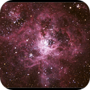 Tarantula NGC 2070,                                Roger Groom
