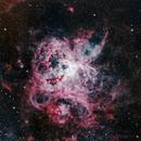 NGC 2070 Tarantula LRGBHa Close Up,                                Peter Brackenridge