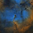 IC1396 Elephants Trunk Nebula,                                Peter Jenkins