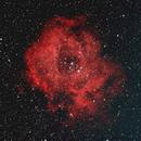 The Rosette Nebula,                                cclark