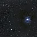 Iris Nebula NGC 7023 ,                                Tom Masterson