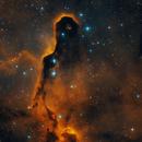 Tr37 Elephant's Trunk Nebula,                                Alexander Zaitsev