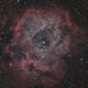 Rosette Nebula,                                Laurence Pap