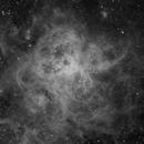 Tarantula Nebula in H-alpha,                                Henry Kwok