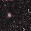 Iris Nebula - NGC7023,                    Pam Whitfield