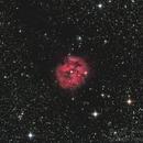 Caldwell 19 Cocoon Nebula,                                Kevin Fitzpatrick