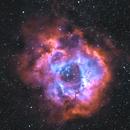 Rosette Nebula in HOO,                                Shubhkarman Singh