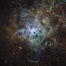 Tarantula Nebula SHO,                                Rod Kennedy