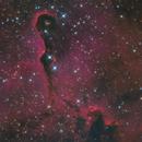 The Elephant's Trunk Nebula,                                Tristan Campbell