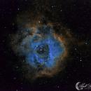 Rosette Nebula in Hubble Palette Narrow Band,                                Mark Forteath