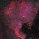 North America Nebula - NGC7000,                                Thomas Richter