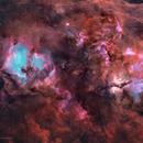 Cygnus in HOO,                                Bowen Cameron