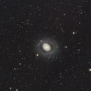 M94 Croc's  Eye Galaxy,                                Dennis Kaiser