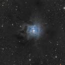 NGC 7023 / Iris Nebula,                                Falk Schiel