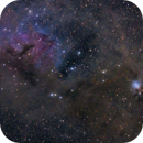"IC348 NGC1333,                                Makoto""G-H""Shindou"