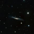 NGC 3079 and a Nice Surprise,                                Bob Stevenson