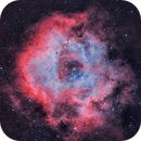 The Rosette Nebula (Caldwell 49),                                Peter Dunsby