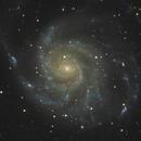 M 101 - Pinwheel Galaxy,                                CCDMike