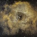 Rosette Nebula in Narrowband,                                Will Czaja