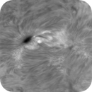 AR2804, HA, Animated Timelapse, High Res, 02-26-2021,                                Martin (Marty) Wise